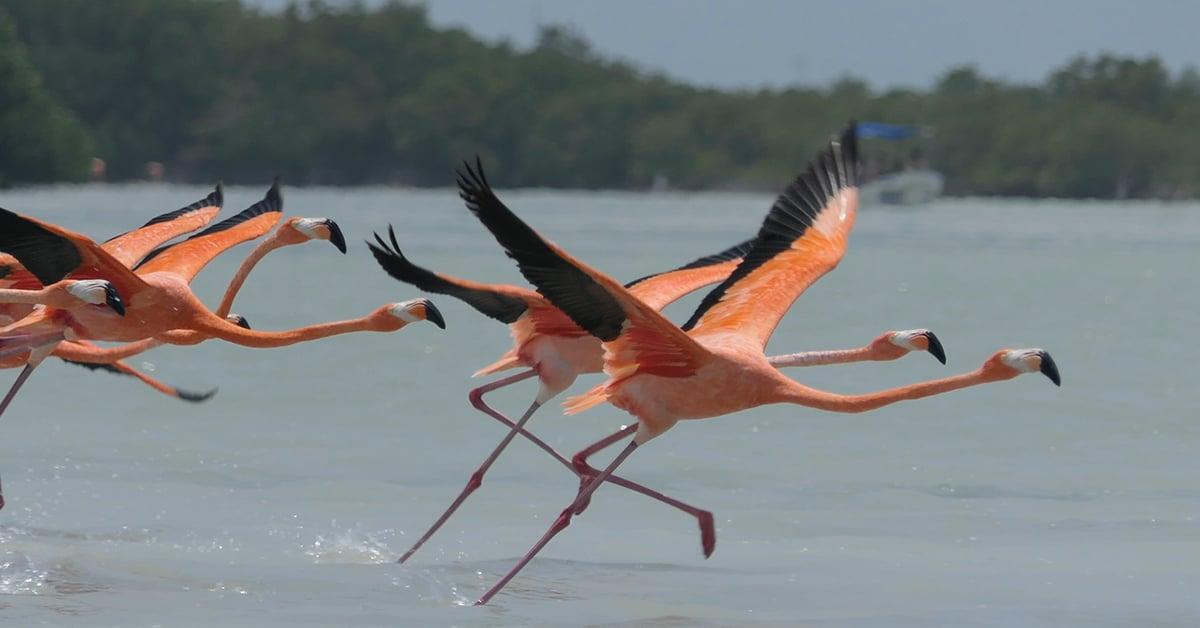Flamingos en playa Telchac